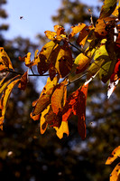 102009_brown_county 009.JPG